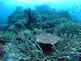 Reef in Papua New Guinea